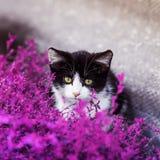 el pequeño gatito es el sentarse divertido en los colores púrpuras fotos de archivo libres de regalías