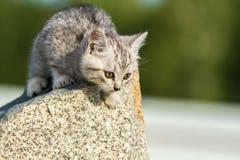 El pequeño gatito mullido se sienta en una roca Imagenes de archivo