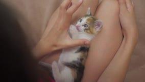 El pequeño gatito se sienta en el revestimiento de un vídeo de la cámara lenta de la niña amistad de una muchacha y de una forma  almacen de video