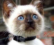 El pequeño gatito vecino del ` s Fotos de archivo