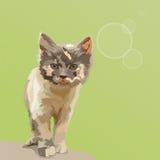 El pequeño gato Imagen de archivo