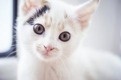 El pequeño gato está mirando la cámara Imagen de archivo