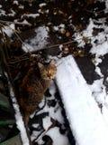 el pequeño gato hermoso en invierno mira ojos redondos fotografía de archivo