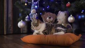 El pequeño gato hermoso juega en el árbol de navidad, días de fiesta de la Navidad, igualando almacen de video