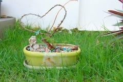 El pequeño jardín para adorna Imagen de archivo