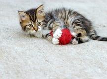 El pequeño jugar del gatito Imagenes de archivo