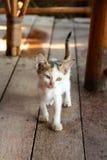 El pequeño jugar del gatito del gato Imagen de archivo