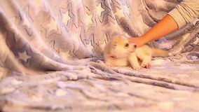 El pequeño jugar fornido lindo de los perritos Perros de los bebés divertidos y cómicos Los animales acarician - la felicidad par metrajes