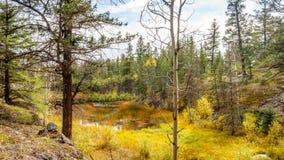 El pequeño lago cenagoso en el valle de cinco lagos se arrastra Foto de archivo