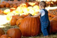 El pequeño muchacho encuentra la calabaza grande Foto de archivo libre de regalías