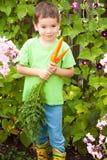 El pequeño muchacho feliz está comiendo zanahorias en un jardín Fotografía de archivo