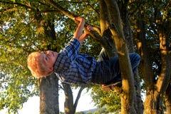El pequeño muchacho rubio está colgando en el árbol Imágenes de archivo libres de regalías