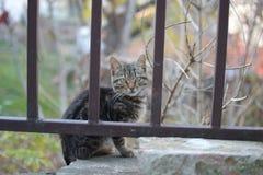 El pequeño negro gris coloreó el gato detrás de la cerca marrón Fotos de archivo