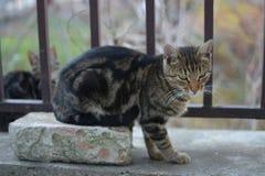 El pequeño negro gris coloreó el gato en bricket rojo Imágenes de archivo libres de regalías