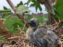 El pequeño niño del pájaro Imagenes de archivo