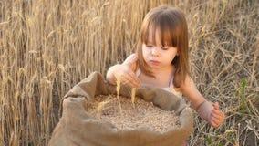 El pequeño niño está jugando el grano en un saco en un campo de trigo niño con trigo a disposición el bebé sostiene el grano en l almacen de metraje de vídeo
