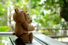 El pequeño oso se está sentando imagen de archivo