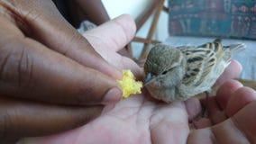 El pequeño pájaro Fotos de archivo libres de regalías
