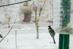 El pequeño pájaro come Foto de archivo