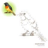 El pequeño pájaro del minivet aprende dibujar vector stock de ilustración