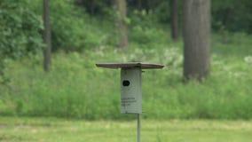 El pequeño pájaro trae la comida metrajes