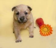 El pequeño perrito amarillo con la flor artificial se sienta en amarillo Imagen de archivo