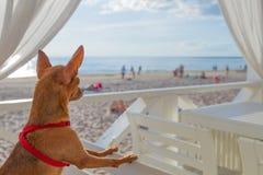 El pequeño perrito mira una playa Imagen de archivo