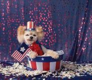El pequeño perro patriótico americano se sienta en cubo de las barras y estrellas Foto de archivo