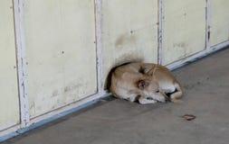 El pequeño perro perdido encrespado para arriba y puesto en una calle fría Perro perdido infeliz de la raza mezclada fotografía de archivo libre de regalías