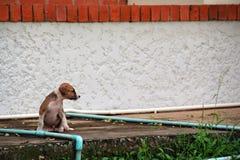 El pequeño perro pobre en templo está esperando alguien Fotografía de archivo libre de regalías