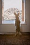 ¡El pequeño perro resuelve el sapo gigante! Fotografía de archivo libre de regalías
