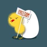 El pequeño polluelo travieso amarillo peludo sostiene una placa de stock de ilustración