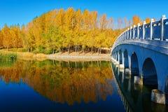 El pequeño puente y la orilla del lago otoñal de los árboles Fotos de archivo libres de regalías