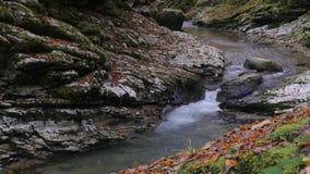 El pequeño río animado de Psaho fluye a través de la garganta de la piedra del otoño en el Cáucaso 4K almacen de video