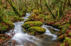 El pequeño río en Fragas hace Eume Imagen de archivo