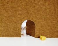 El pequeño ratón que sale de él es agujero Foto de archivo