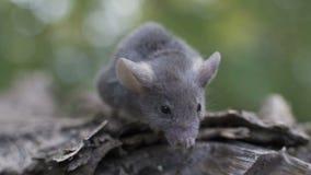El pequeño ratón se está sentando en un tronco de árbol, mirando alrededor almacen de metraje de vídeo