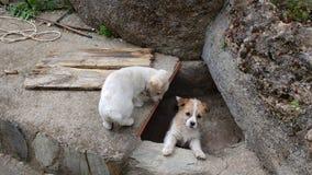 El pequeño reloj de los perritos Foto de archivo