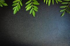 El pequeño verde deja el arreglo en el fondo negro Fotografía de archivo