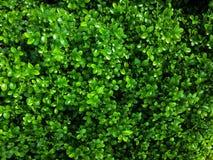 El pequeño verde deja el fondo Fotos de archivo