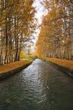 El pequeños río y árboles Fotos de archivo