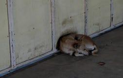 El peque?o perro perdido encrespado para arriba y puesto en una calle fr?a Perro perdido infeliz de la raza mezclada fotografía de archivo