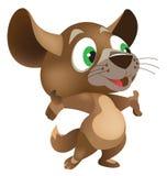 El pequeño animal es la chinchilla Imágenes de archivo libres de regalías