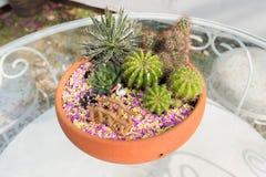 El pequeño jardín del cactus Foto de archivo libre de regalías