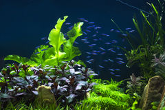 El pequeño tanque del acuario Imágenes de archivo libres de regalías