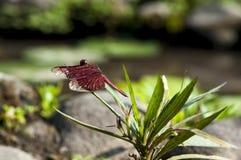 El perfil de la libélula Foto de archivo libre de regalías