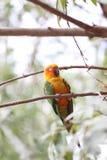 El periquito o el loro está durmiendo en rama de árbol Imagen de archivo