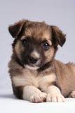 El perrito Fotos de archivo