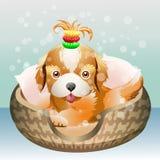El perrito Foto de archivo libre de regalías