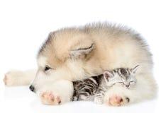 El perrito abraza el gatito soñoliento Aislado en el fondo blanco foto de archivo